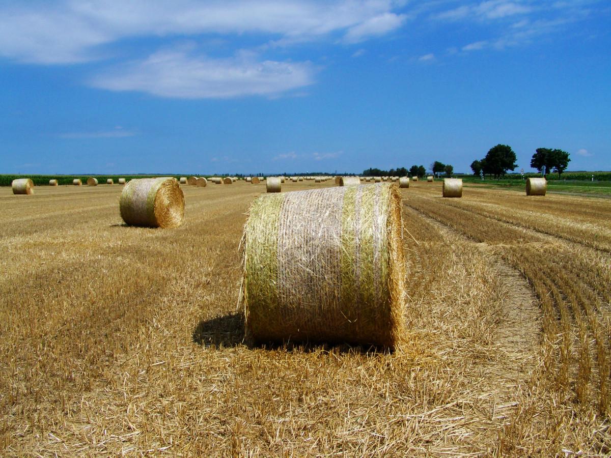 Картинки с рулонами сена в поле