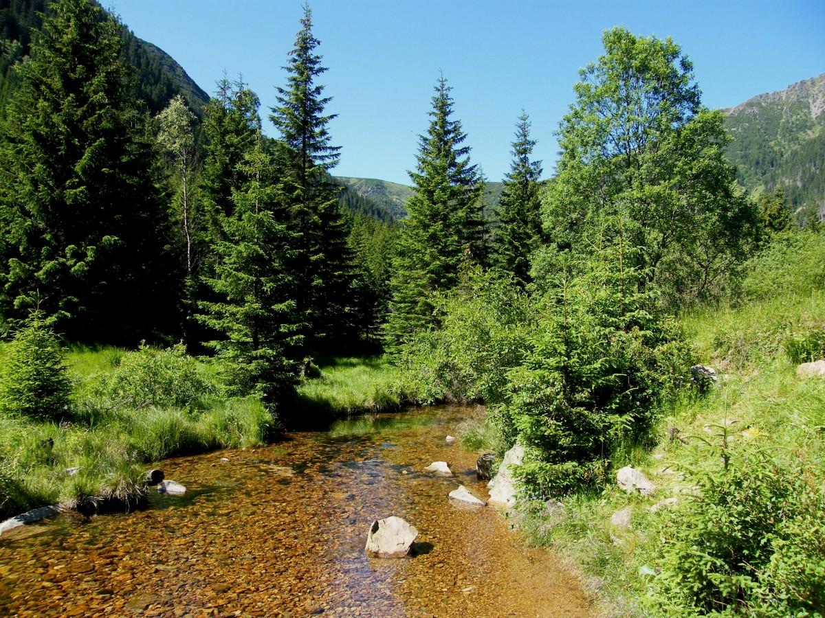 Картинки у лесного ручья