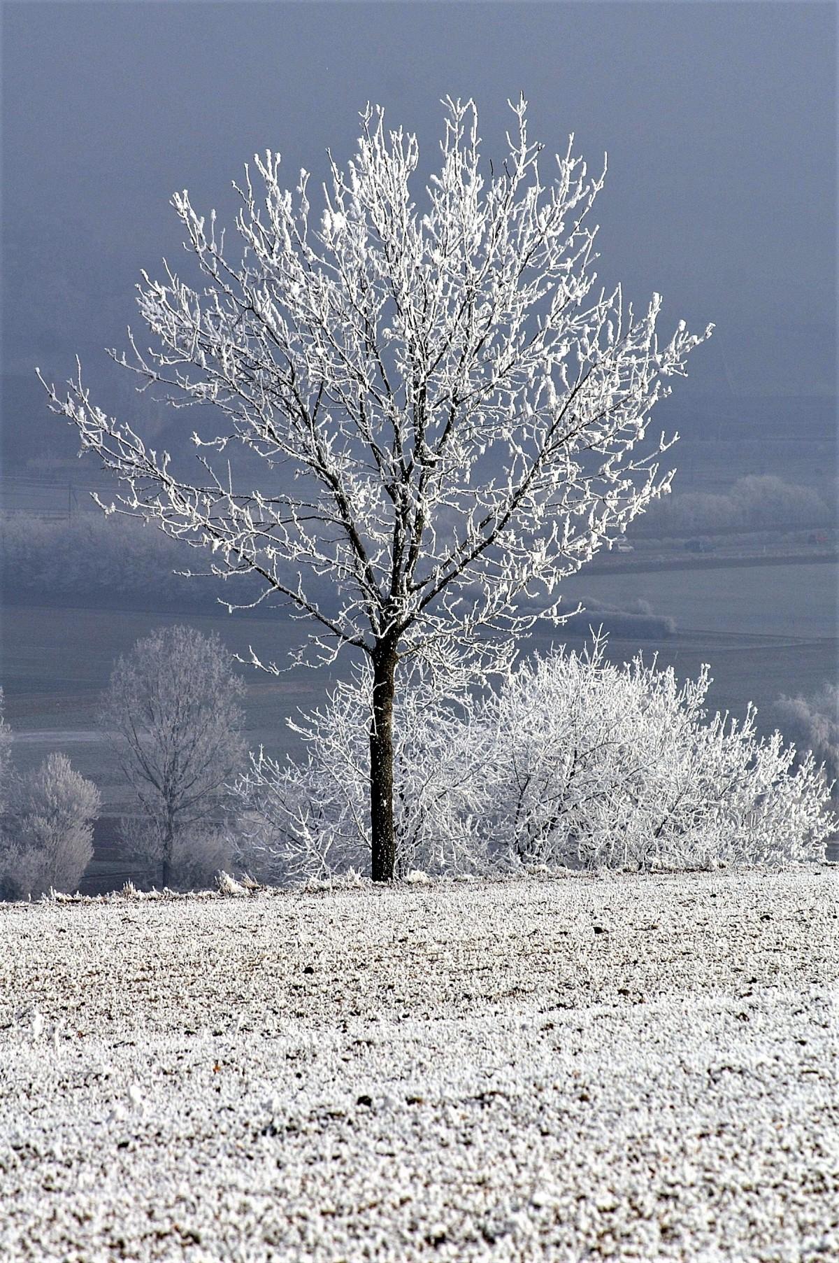 картинка дерево зимой без снега такой картины подойдет