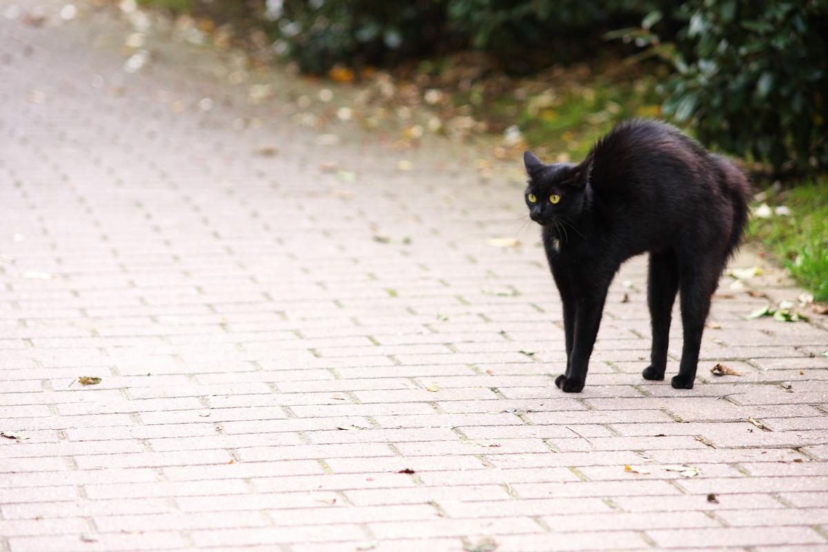 Staršie zadarmo čierna mačička