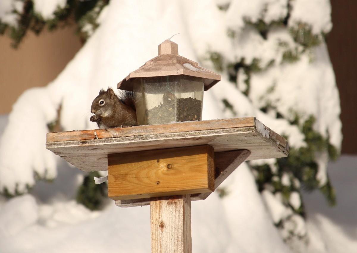 images gratuites neige hiver oiseau animal faune cureuil birdhouse mangeoire pour les. Black Bedroom Furniture Sets. Home Design Ideas