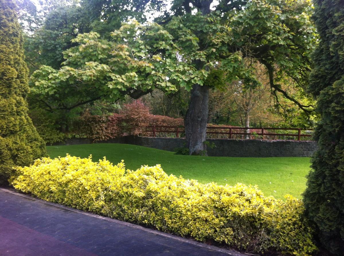 Images gratuites paysage arbre herbe plante pelouse for Plante herbe haute