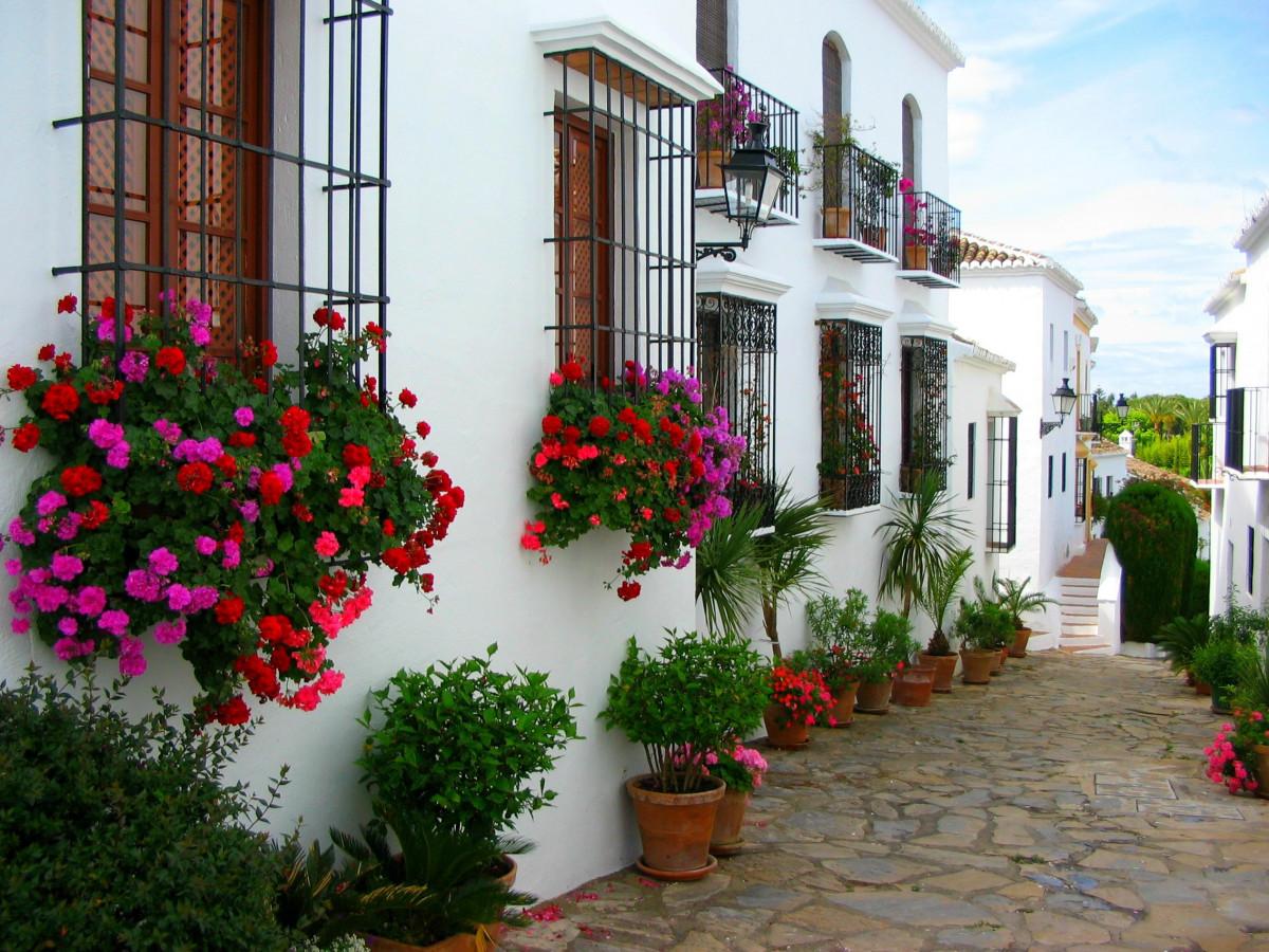 Free Images Plant White Street Villa House Flower Home