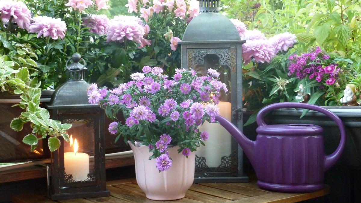 naturaleza, planta, flor, púrpura, verano, balcón
