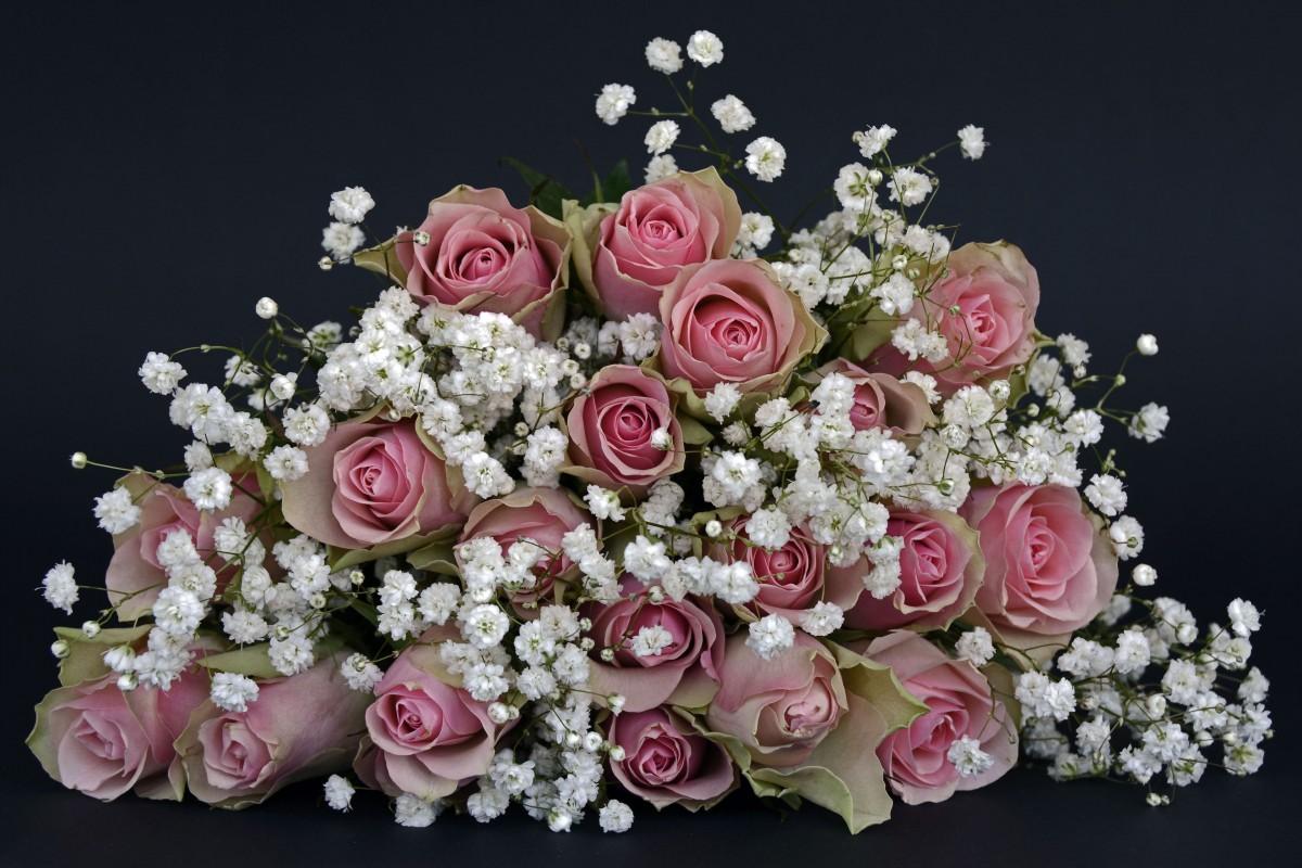 Fotos gratis naturaleza blanco p talo amor rosado - Cortar hierba alta ...