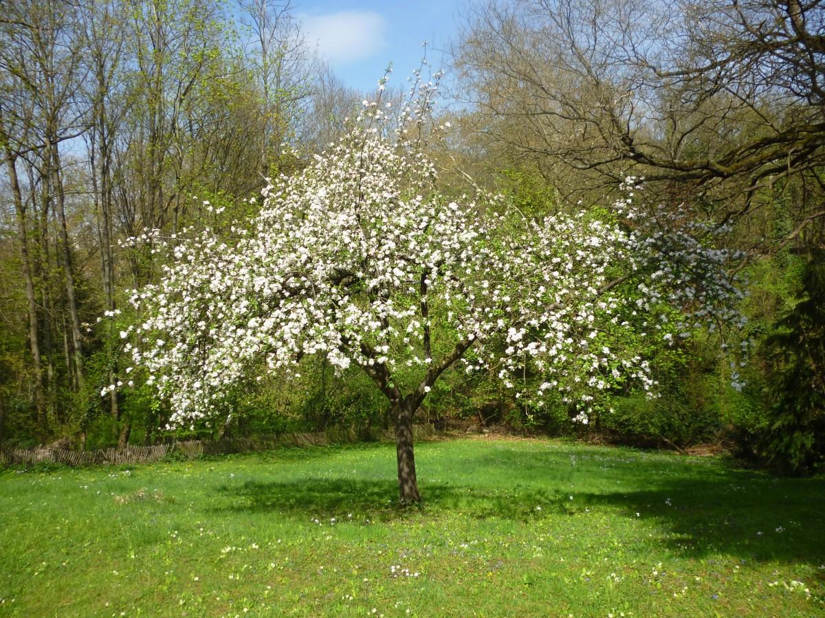 Что посадить на 6 сотках: деревья, растения, кустарники и цветы 16