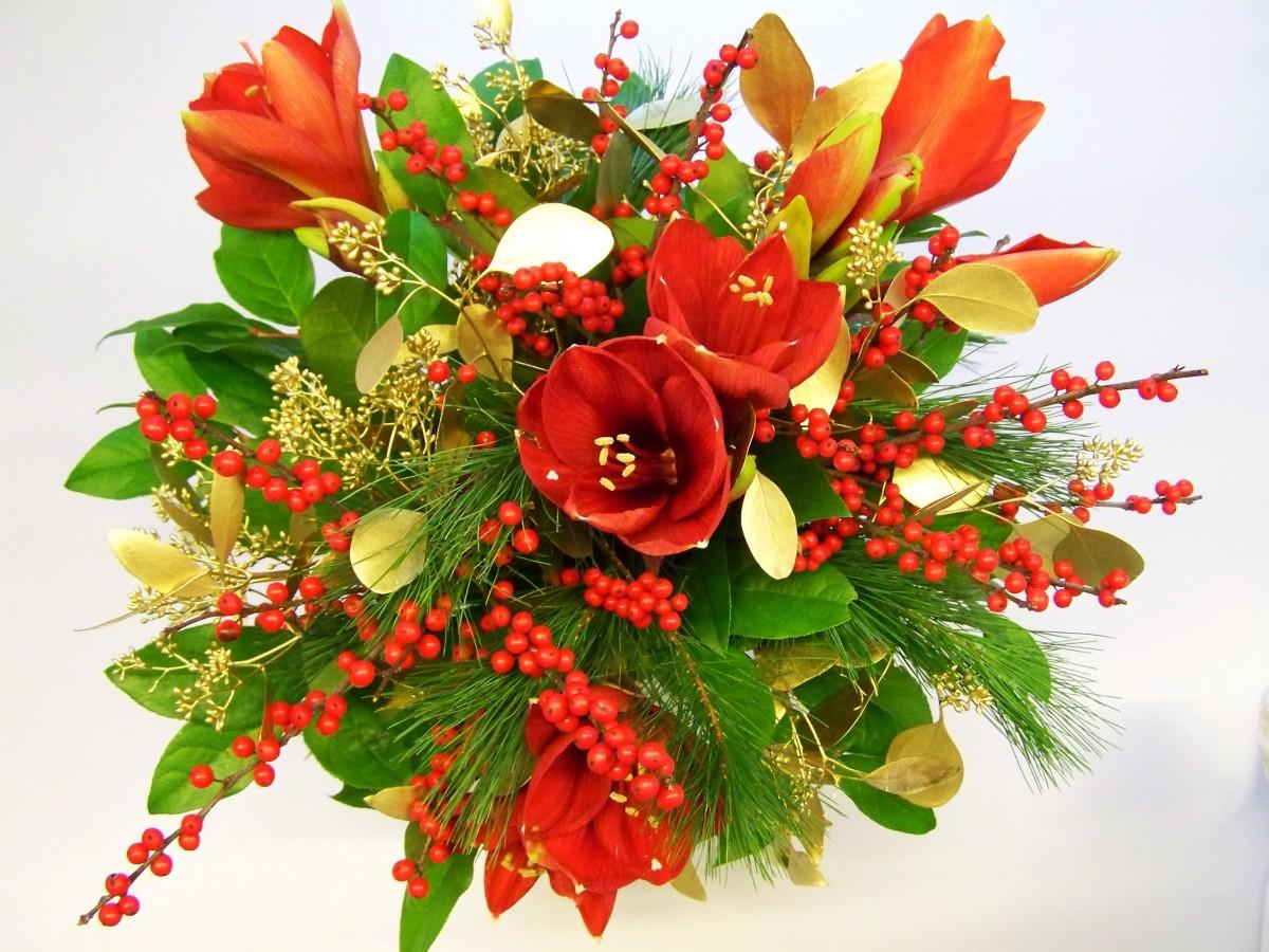 Fotos gratis flor p talo decoraci n navide a flor de - Cortar hierba alta ...