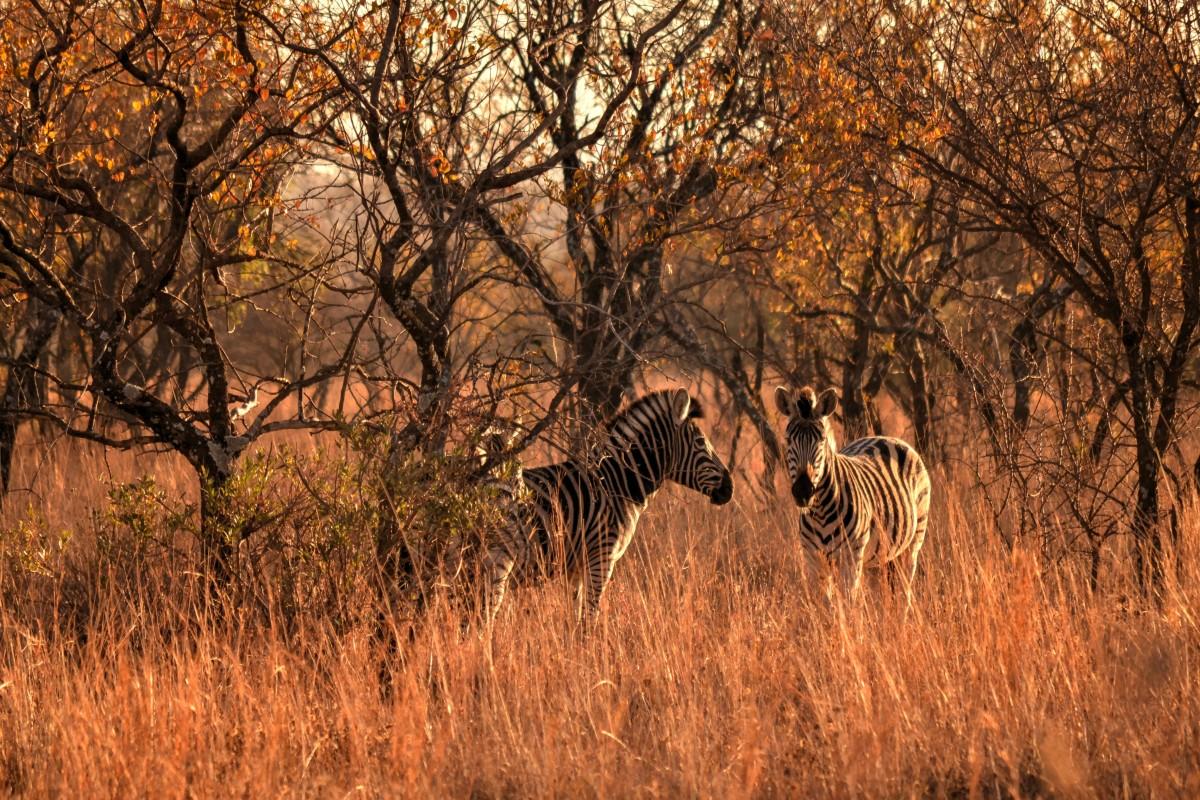Animales-salvajes-fuera-de-zonas-pobladas