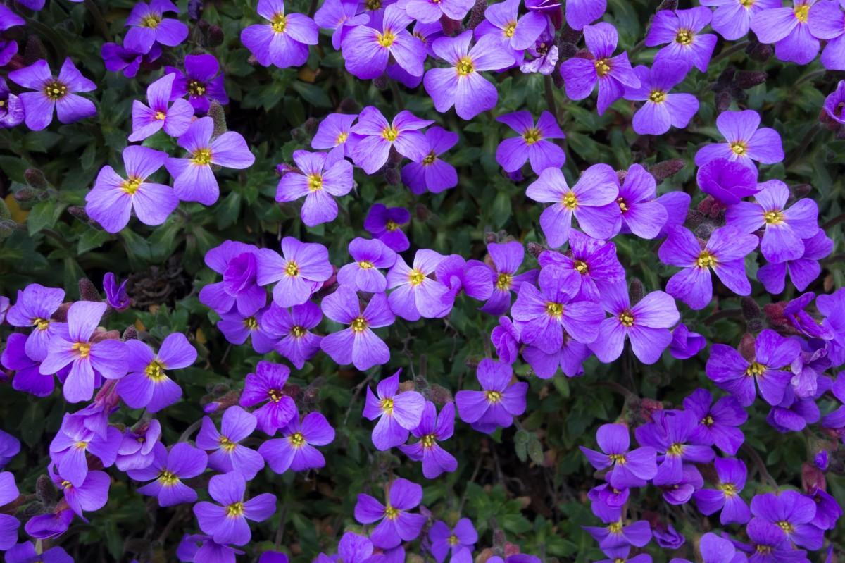 Darmowe Zdjęcia Fioletowy Lato Wiosna Flora Dziki
