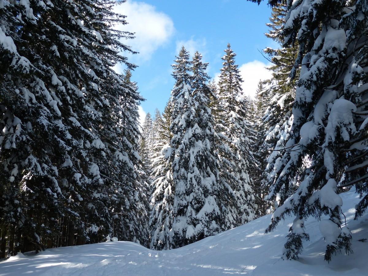 Images Gratuites : Paysage, Arbre, Forêt, Montagne, Du Froid, Hiver, Ciel, Chaîne De Montagnes