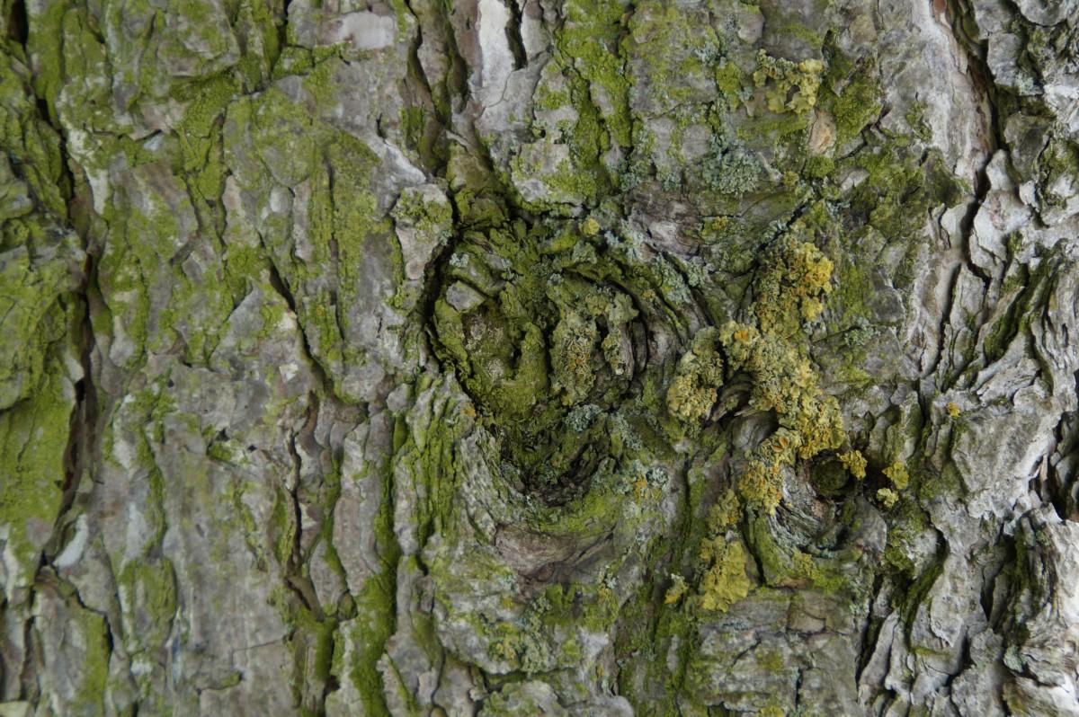 images gratuites arbre for t branche structure feuille fleur tronc vieux mousse. Black Bedroom Furniture Sets. Home Design Ideas