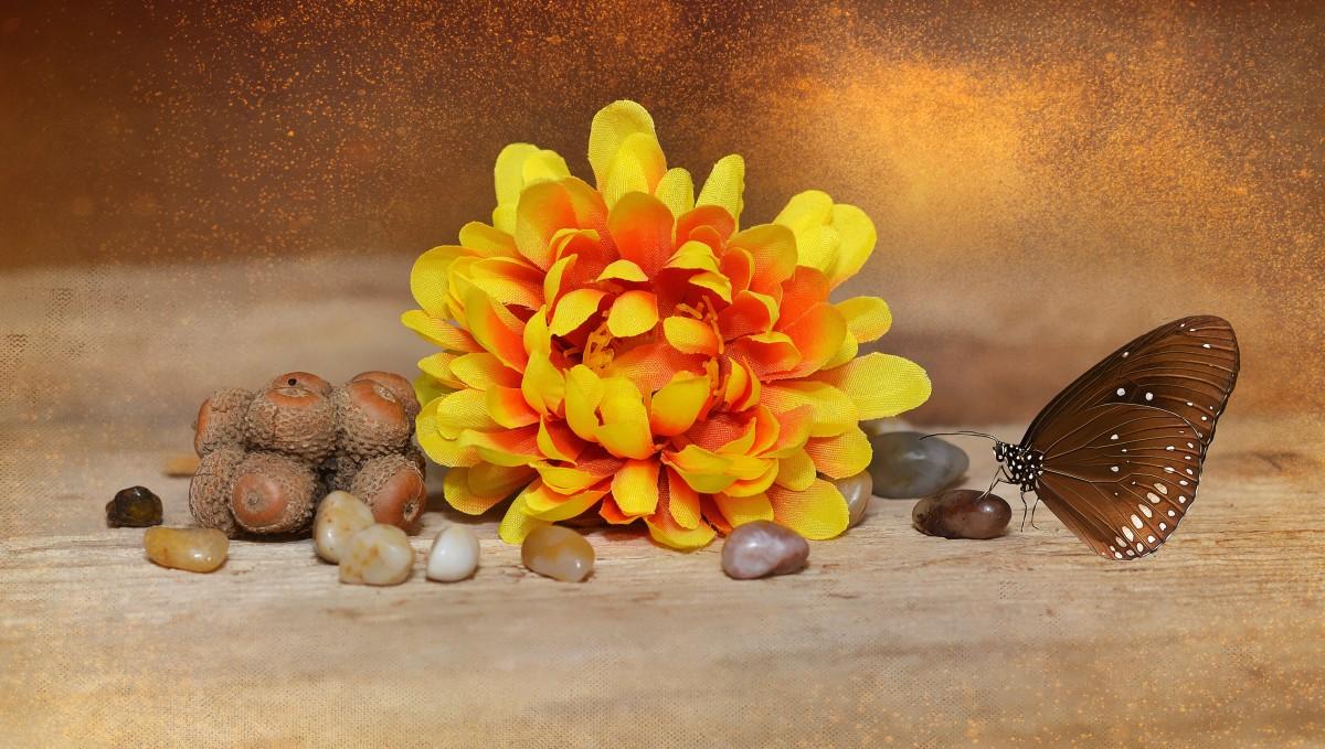 Gratis afbeeldingen bloesem bloeien pot decoratie oranje herfst stilleven schilderij - Deco fabriek ...
