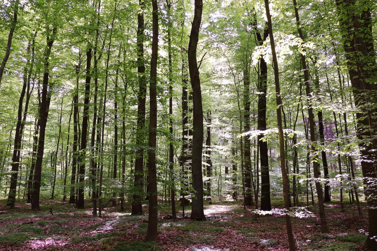 Images gratuites arbre la nature branche livre - Arbres a feuilles caduques ...