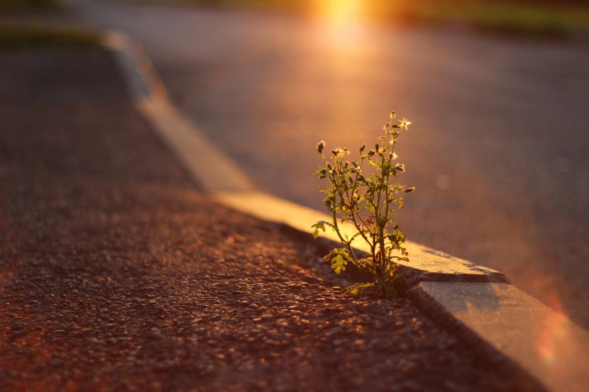 Kostenlose foto natur licht pflanze holz for Boden herbst 2016