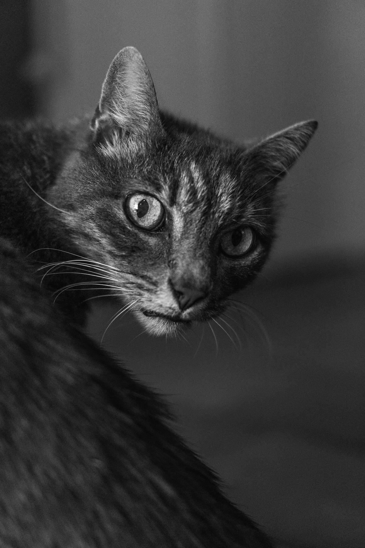 ce296b3c03aa εικονεσ   Γάτα