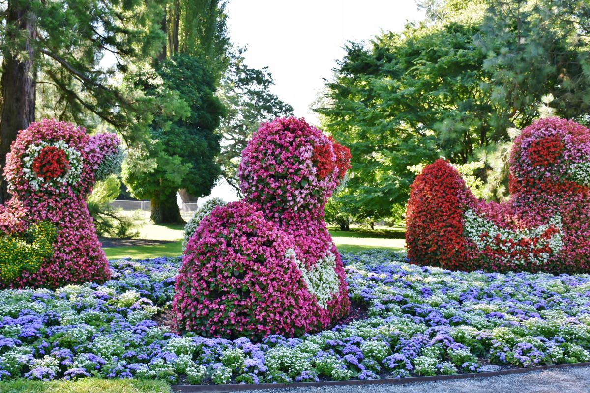 купить цветы для сада в воронеже