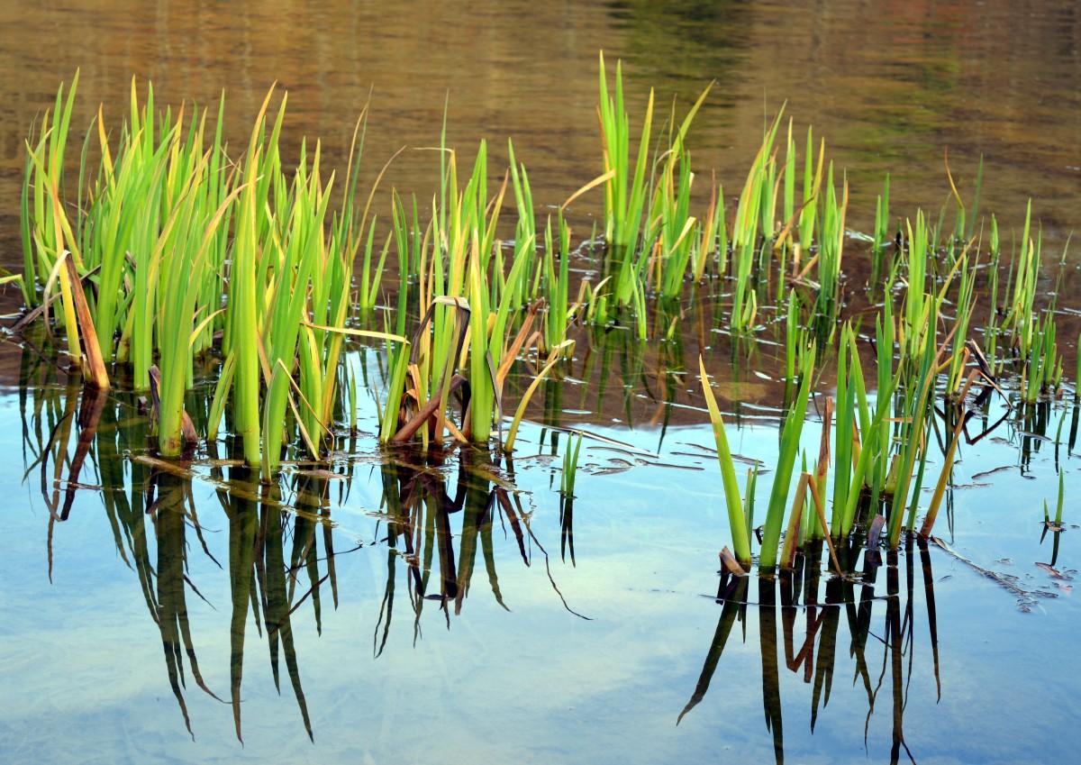 болотные растения картинки с названием тоннелей замка все