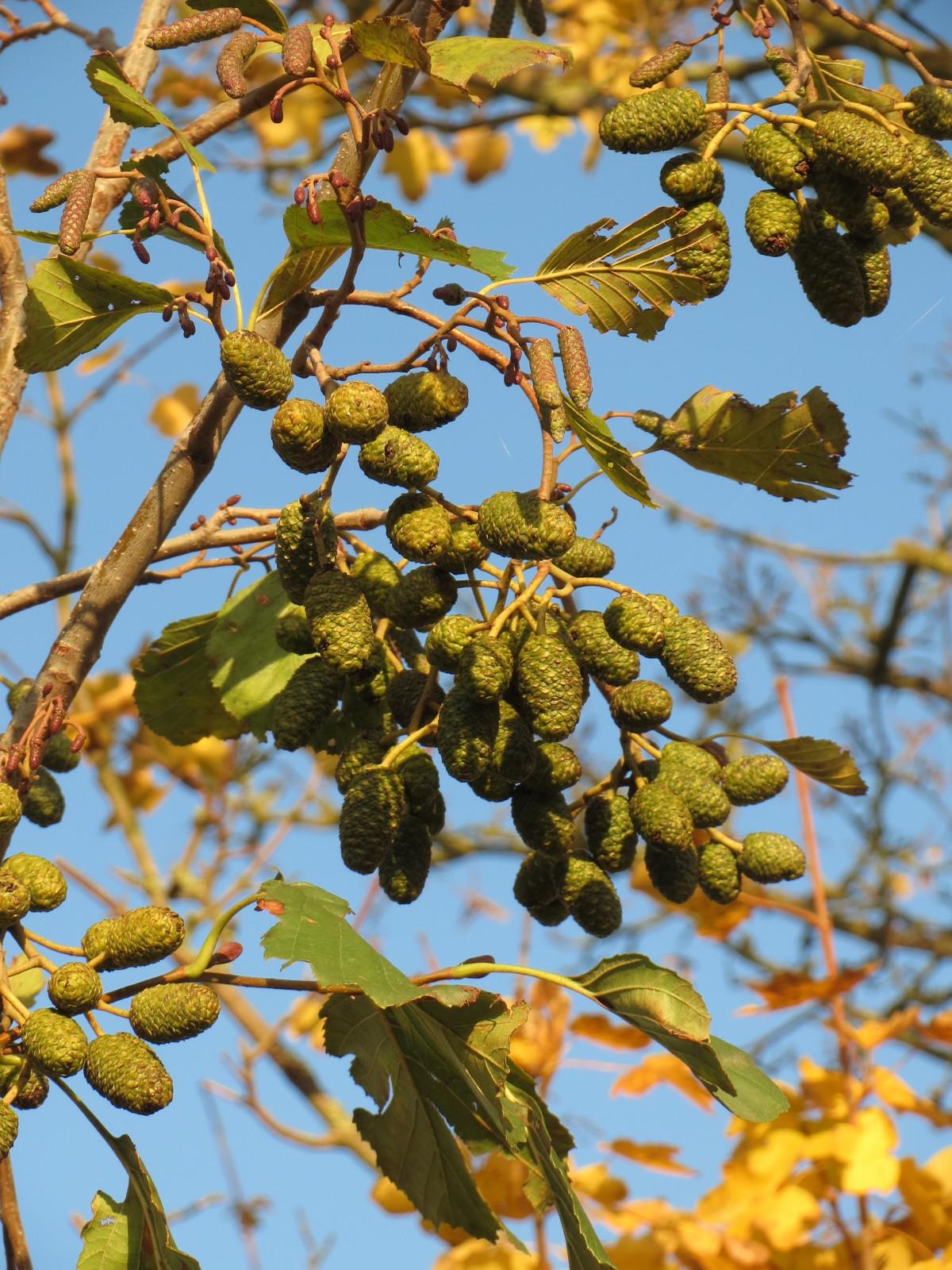images gratuites arbre branche feuille fleur aliments printemps produire l 39 automne. Black Bedroom Furniture Sets. Home Design Ideas