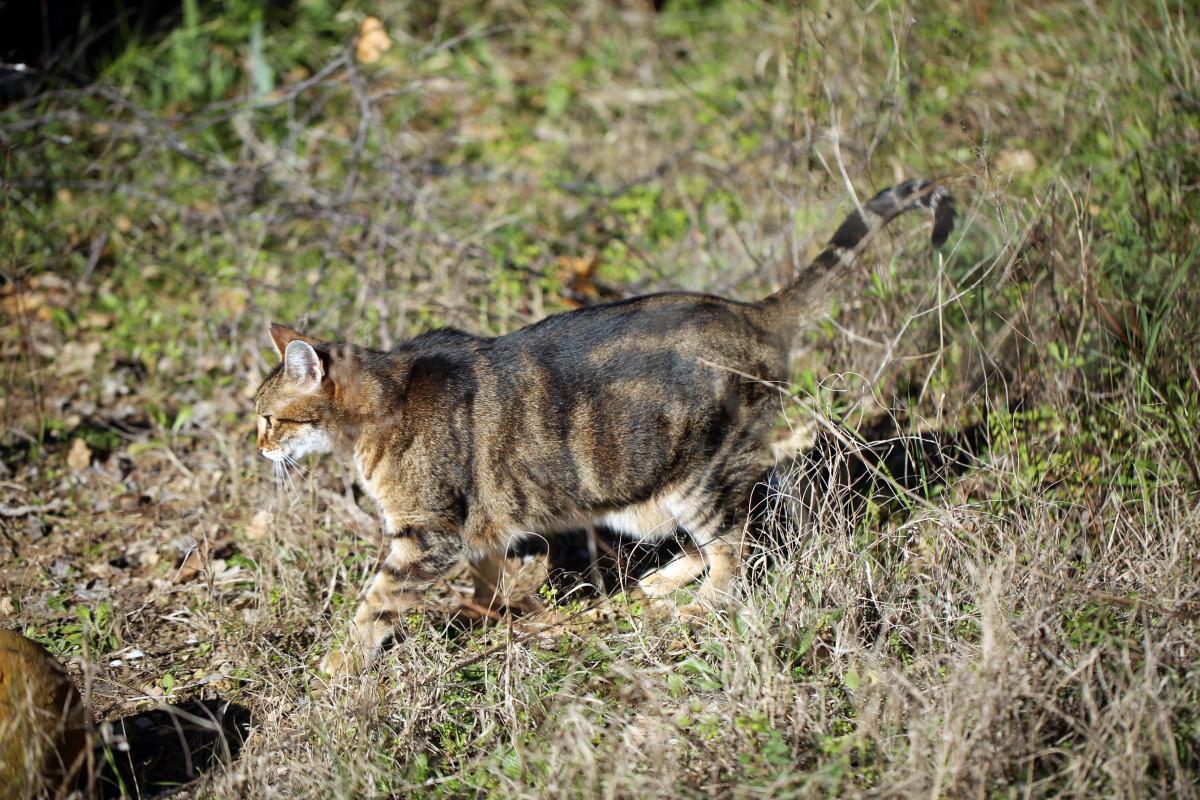 Gratis afbeeldingen gras winter zonneschijn frankrijk for Exterieur kat