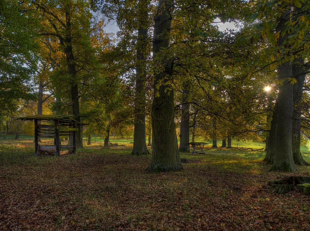 kostenlose foto baum natur wald ast licht sonnenlicht morgen blatt herbst park. Black Bedroom Furniture Sets. Home Design Ideas