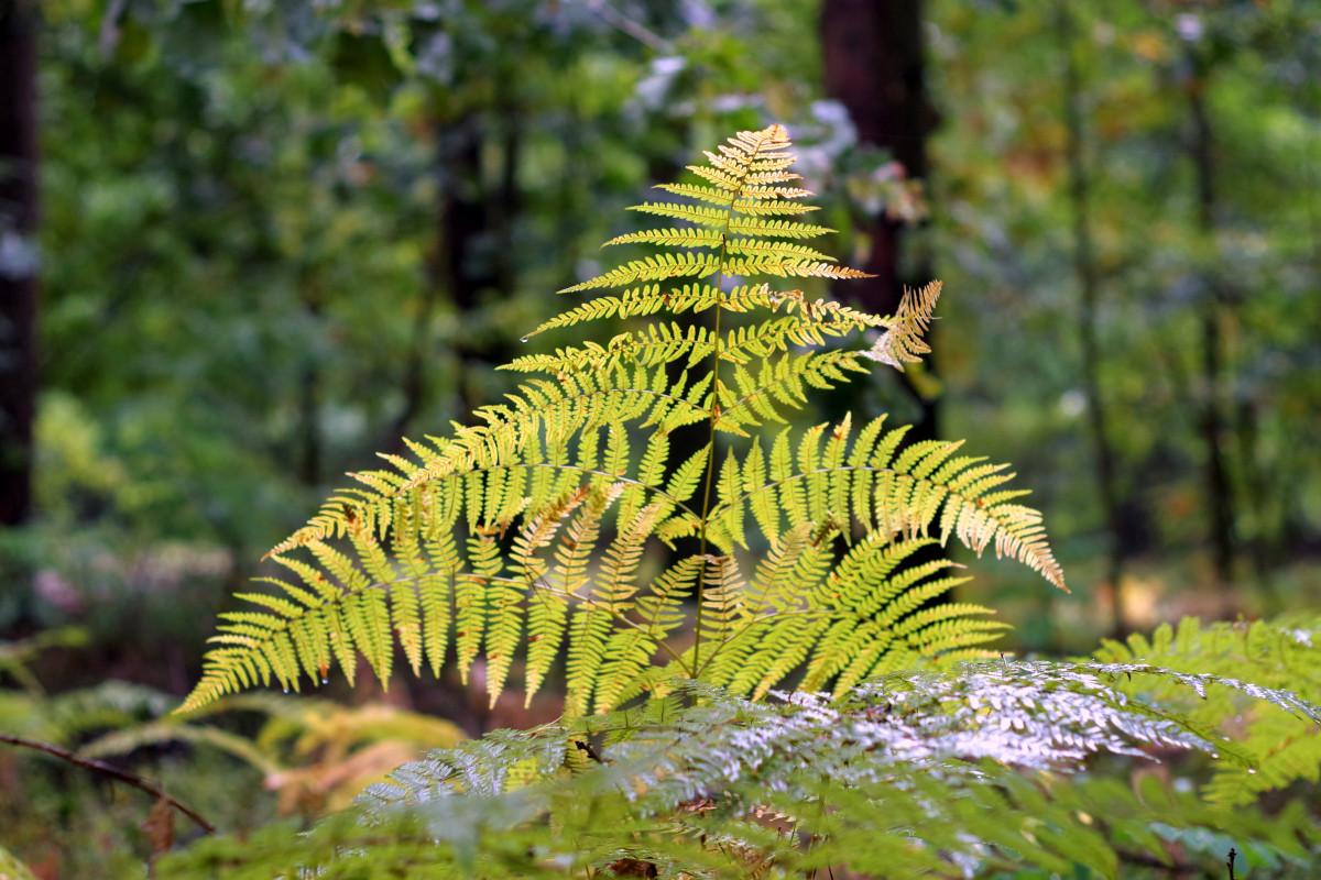 images gratuites arbre la nature feuille fleur humide faune feuillage jungle l 39 automne. Black Bedroom Furniture Sets. Home Design Ideas