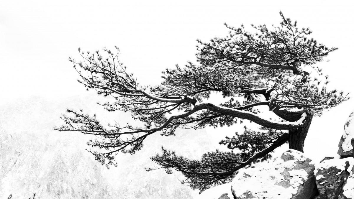 images gratuites arbre branche noir et blanc plante. Black Bedroom Furniture Sets. Home Design Ideas