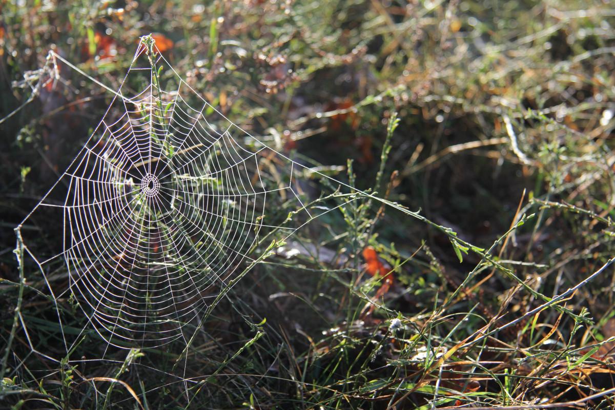 поможет правильно красивые фото пауков в паутине выполнения работ