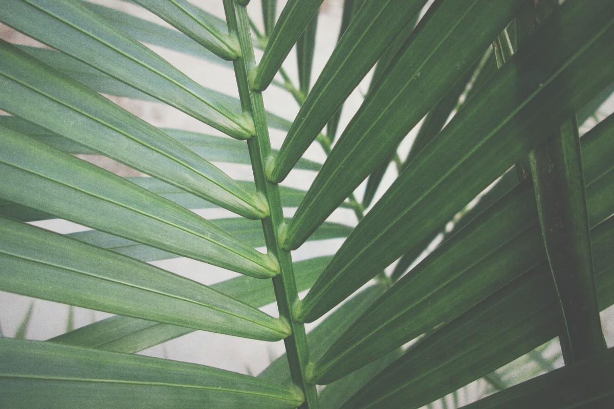 Images gratuites arbre herbe branche plante feuille for Ligne de plantes