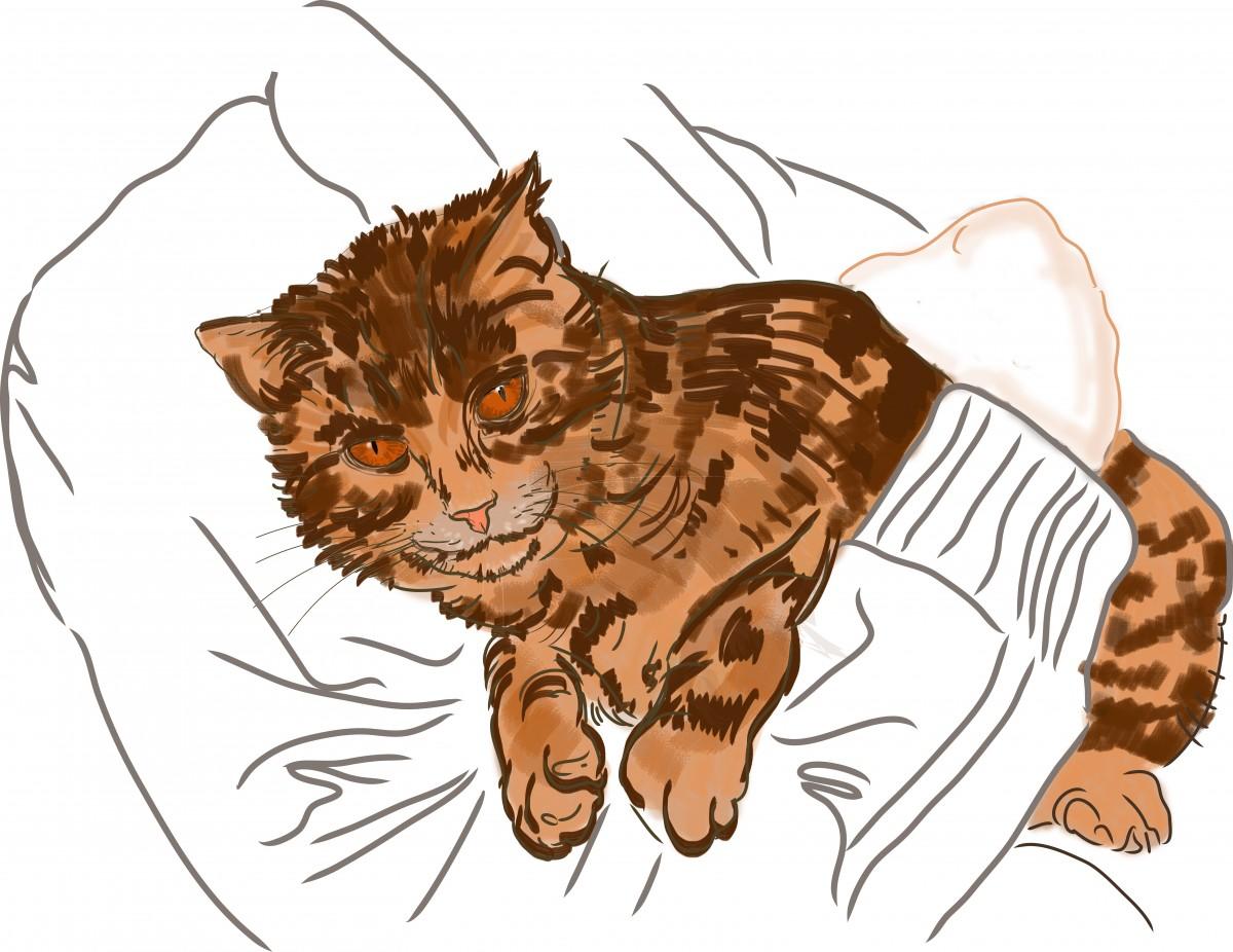gambar kucing sketsa ilustrasi obrolan katze skizze dessin clipart esquisse tablettegraphique wacom gambar kartun clip art 6279x4850 168828 galeri foto pxhere kucing sketsa ilustrasi obrolan