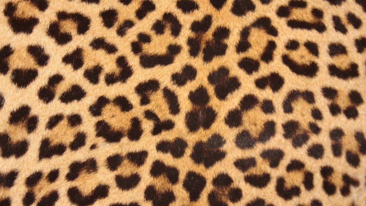 Cheetah Fur Close Up Free Images : nature, ...