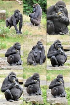 Gambar Cabang Bermain Margasatwa Kebun Binatang Binatang
