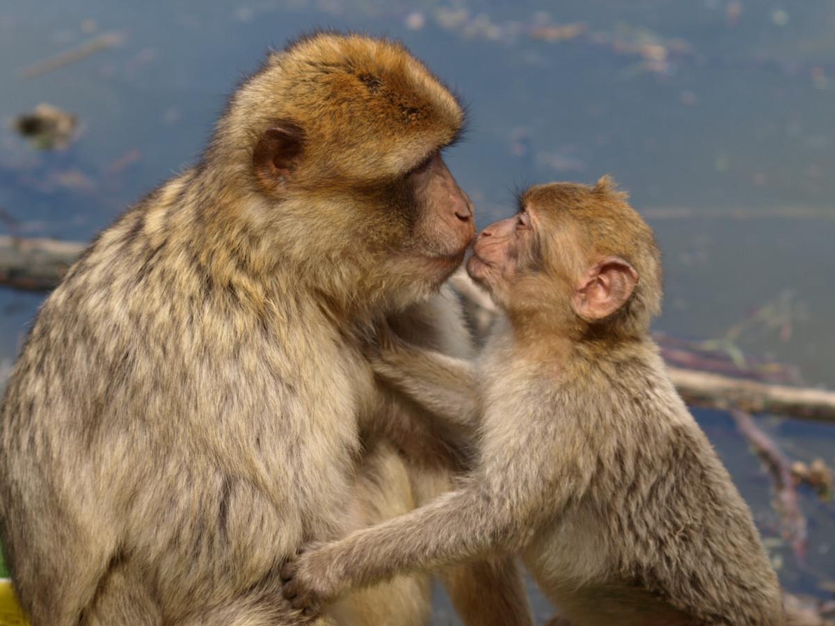 обезьяна целует картинки новобрачных это