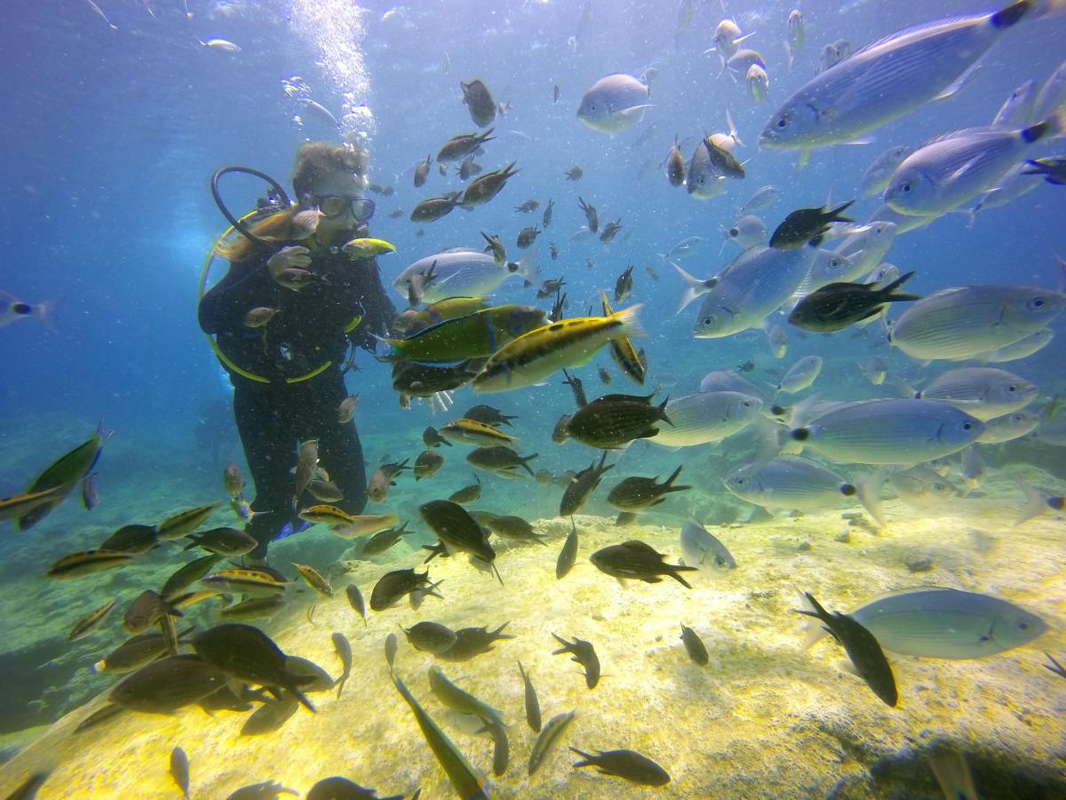 Free images nature ocean animal underwater swim for Sea water fish