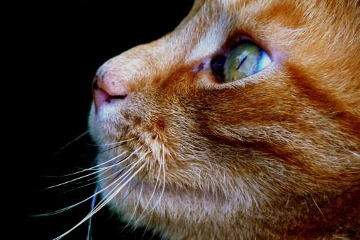 Tier,Haustier,Katze,Säugetier,Haar,Porträt