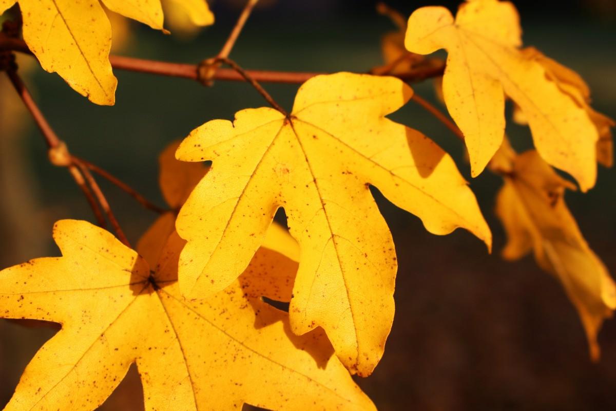Днем рождения, картинки желтых листьев