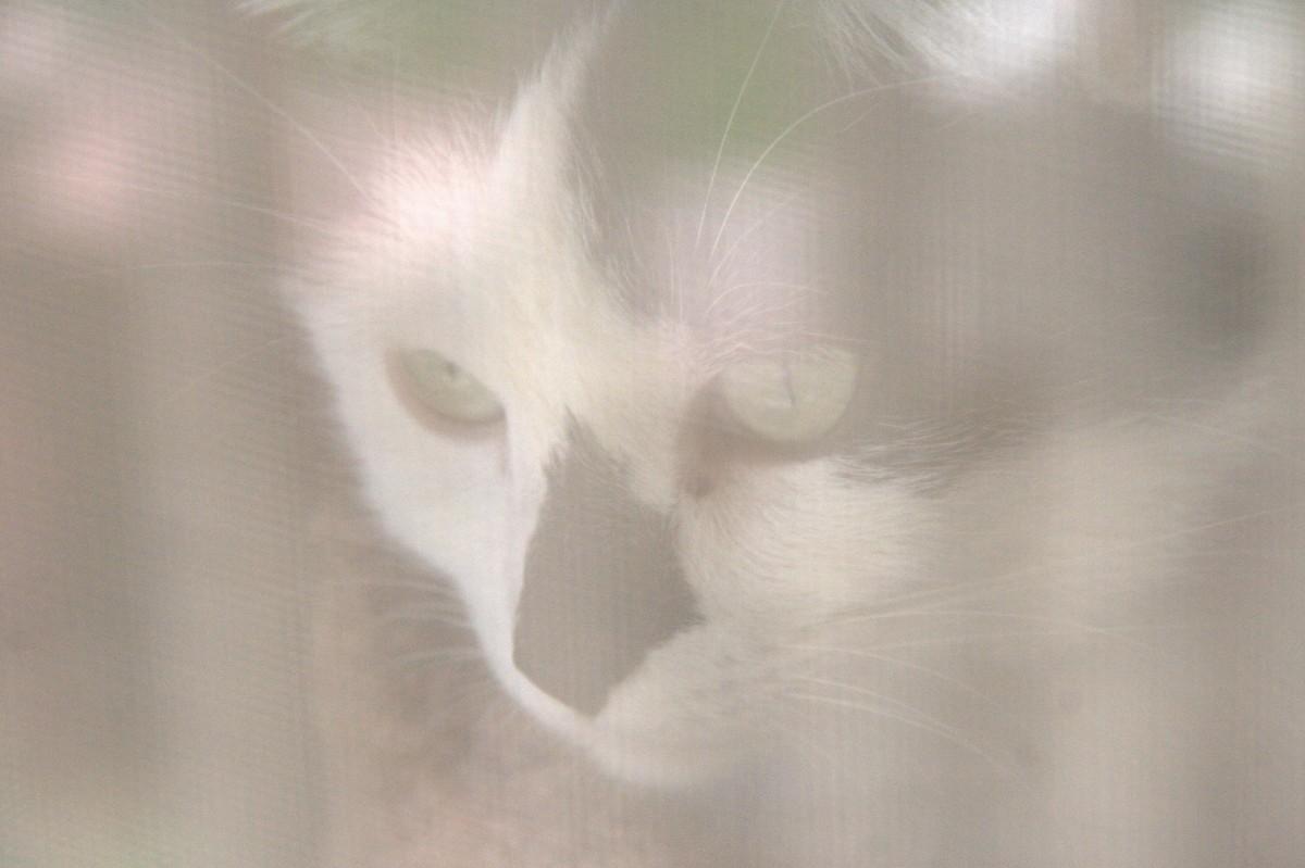 Zblízka fotografie dívek kočička