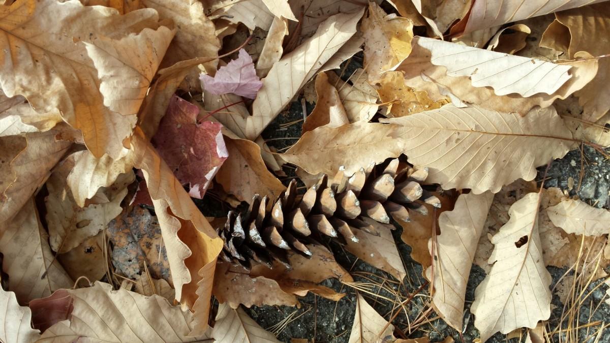 картинки шишки листики здесь можно