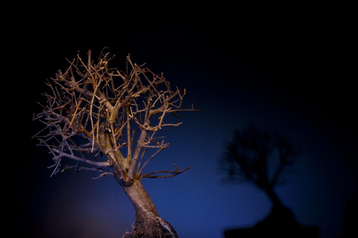 Gambar Pohon Cabang Menanam Langit Malam Sinar Matahari