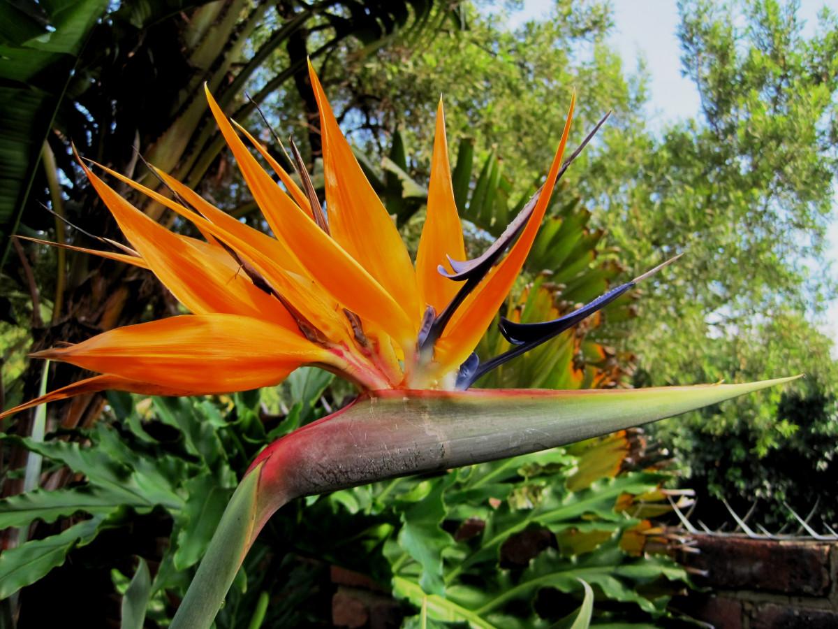 Цветы африки картинки