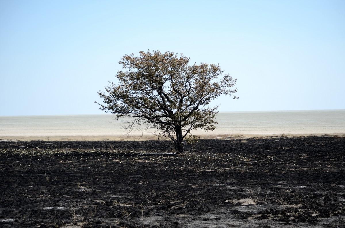 Free Images Landscape Sea Tree Nature Rock Horizon