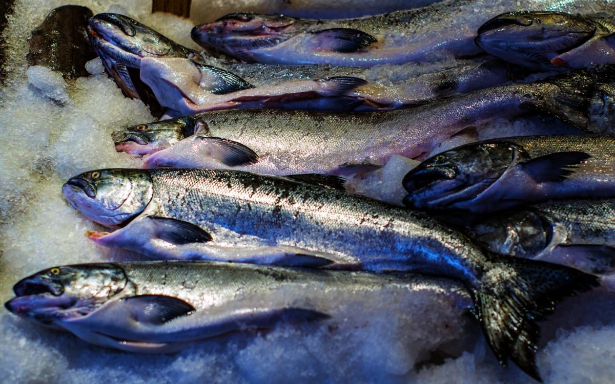 Free Images : sea, food, culinary, fishing, seafood, fresh, market, frozen, freshness, sardine ...