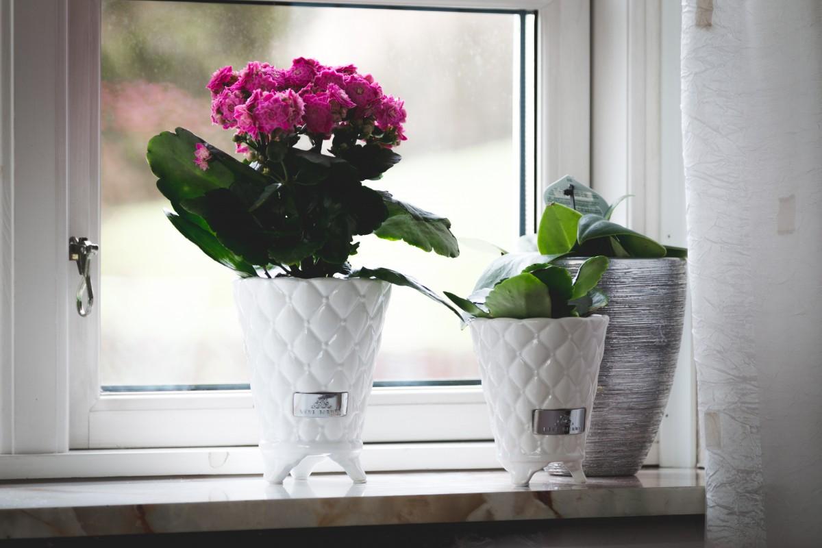 Fotos gratis planta flor pared patr n verde - Iluminacion para plantas ...