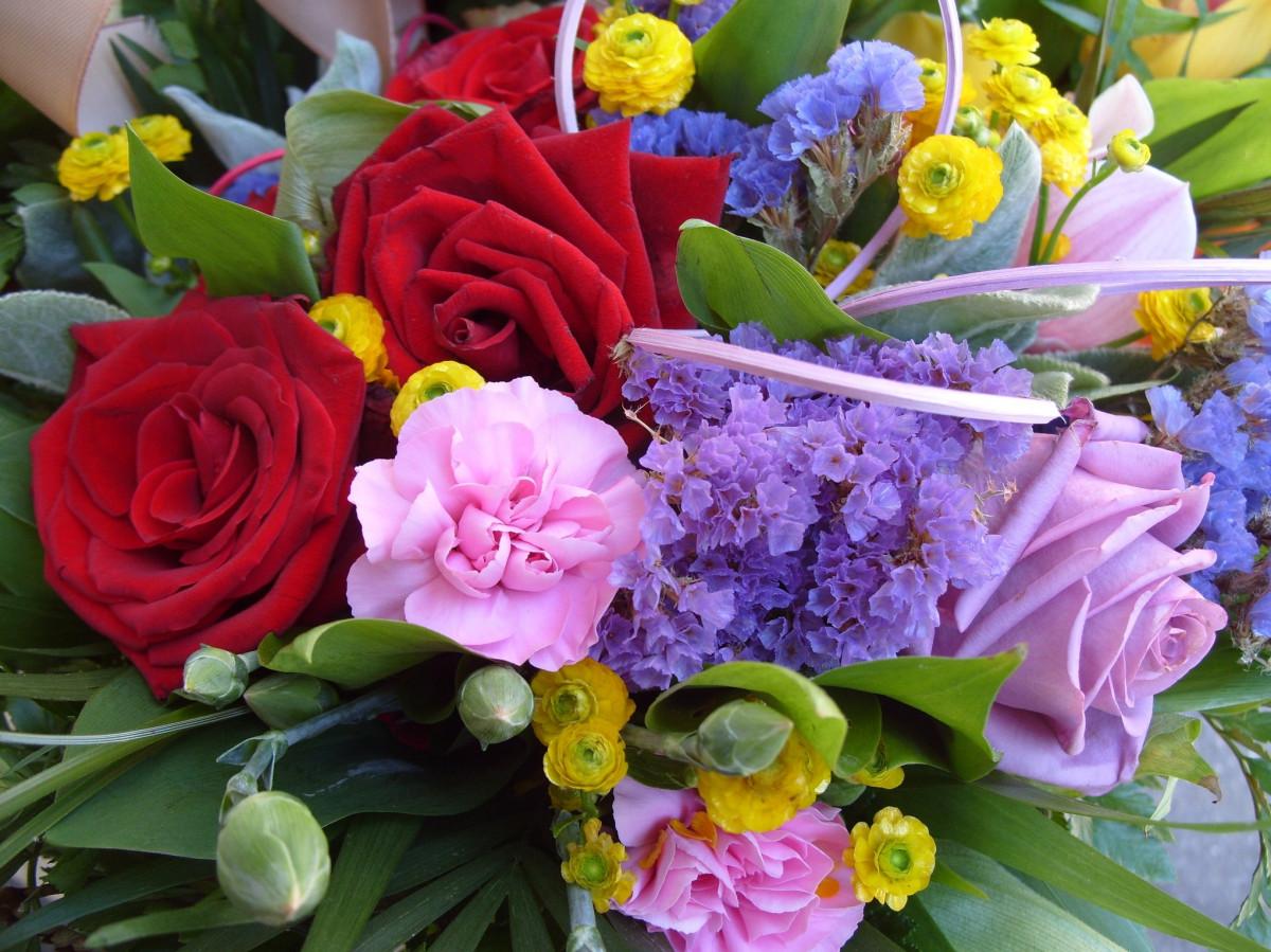 Images gratuites fleur printemps flore fleuriste for Fleurs vente