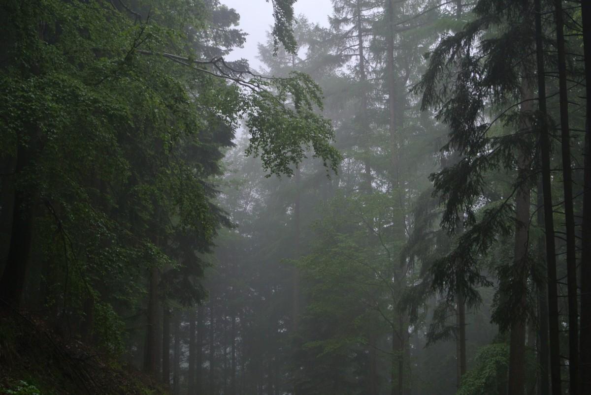 Free Images Tree Nature Fog Mist Sunlight Morning