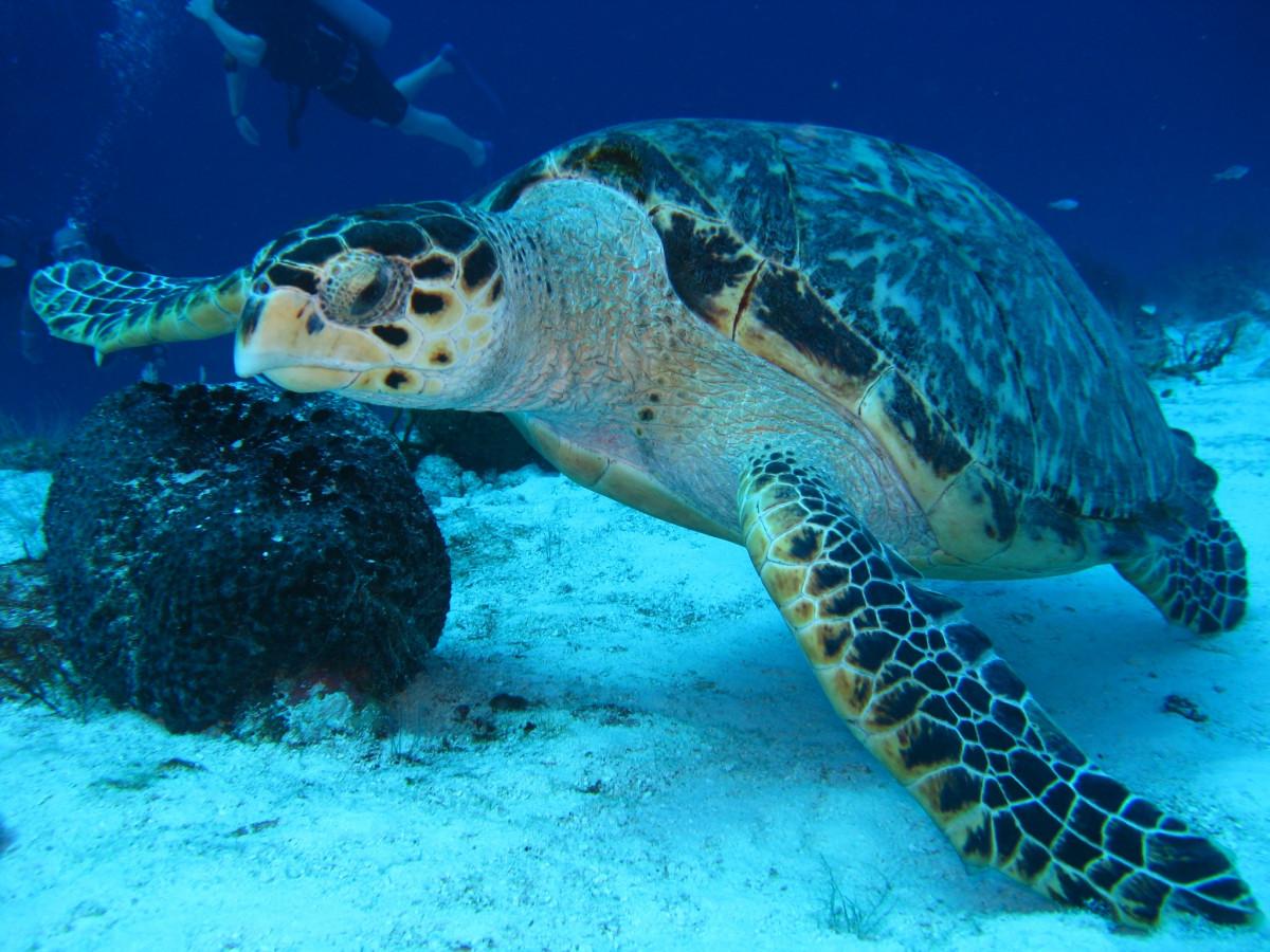 Un buzo encargado de fotografiar la fauna marina 94