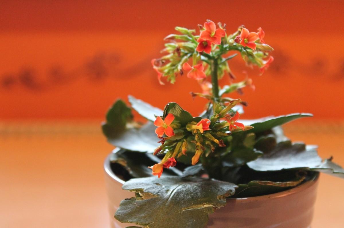kostenlose foto blatt blume bl tenblatt orange muster rot produzieren herbst boden. Black Bedroom Furniture Sets. Home Design Ideas