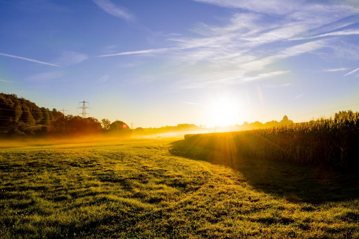 продаже недвижимости фотографии утреннего поля тут