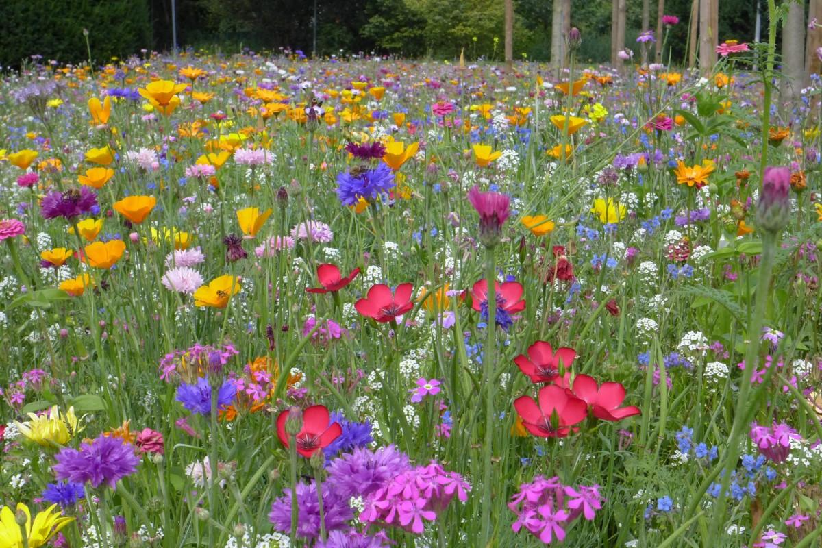 Красота растений летом 63