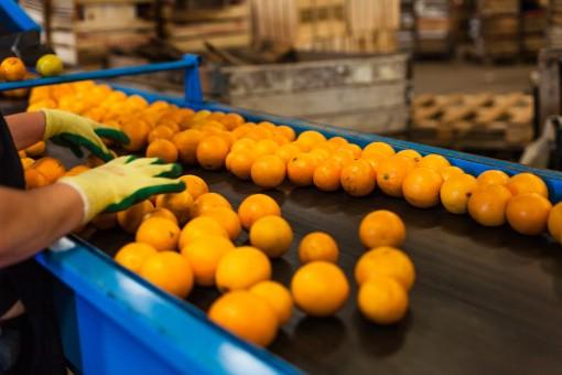 Free Images Work Fruit Orange Food Produce Cuisine