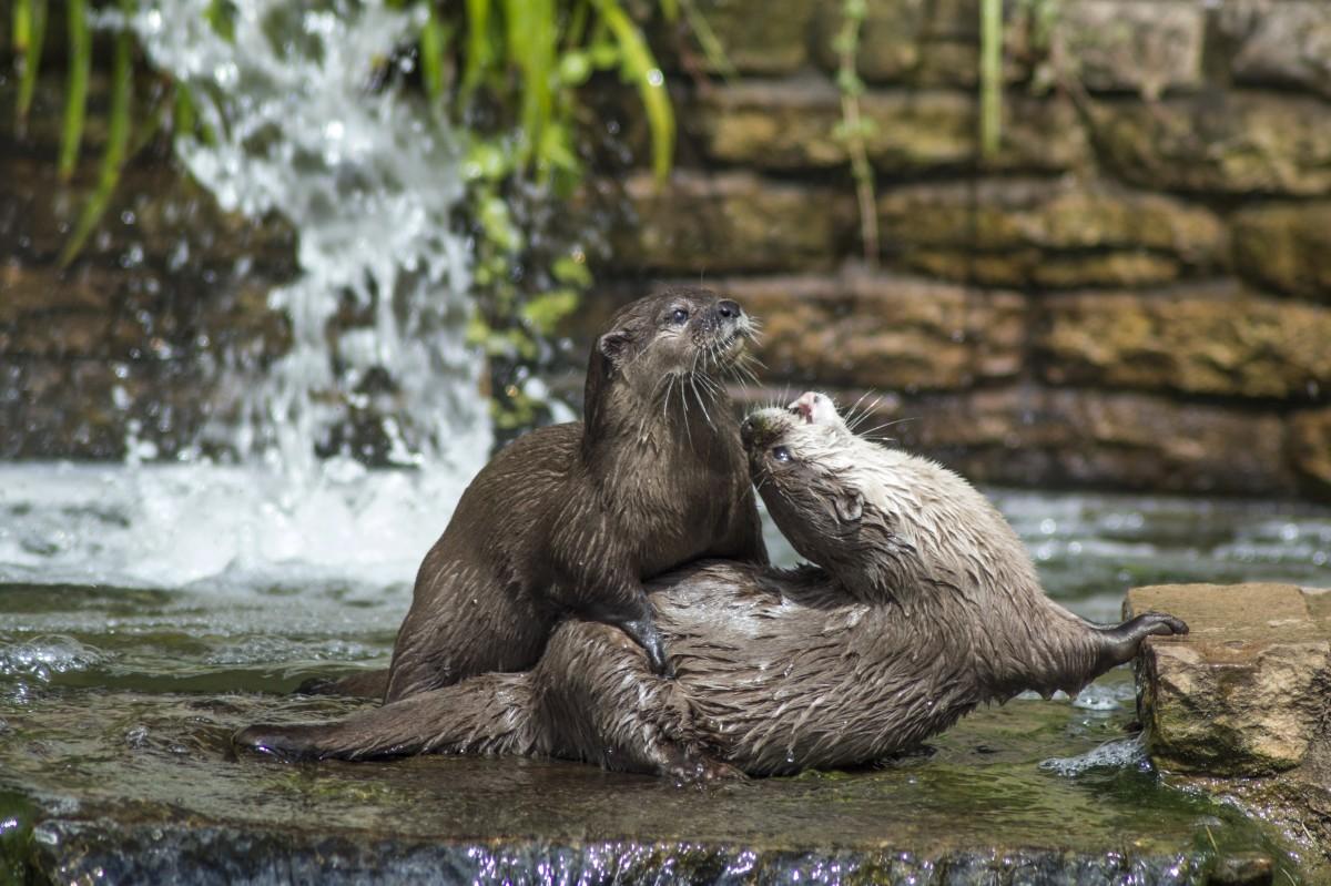 River mammals
